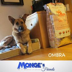 Ombra Monge's friends