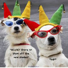 We never jest - Funny pictures and memes of dogs doing and implying things. If you thought you couldn't possible love dogs anymore, this might prove you wrong. Diy Dog Costumes, Funny Costumes, Dog Halloween Costumes, Mardi Gras, Rey Star Wars, Costume Chien, Chien Halloween, Les Gobelins, Four Legged