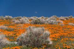 lancaster california - Google Search