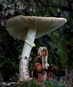 large magic mushrooms in field - Google Search