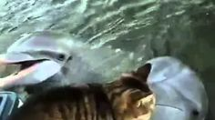 Funny Videos Kissing Cats and Dolphins ⋆ Many Funny Videos Dolphin Encounters, Cat Expressions, Kitten Gif, Cute Cats And Kittens, Kitty Cats, All About Cats, Sports Humor, Cat Memes, Beautiful Creatures