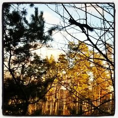 #orava #Kontula #aurinko #lämmittää #itäHelsinki #lähiö #lähiöhelvetti #idylli #squirrel #forest #eastHelsinki #suburbia 5/12/16 #landscape escape