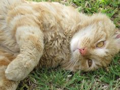 """A Cat Named """"Rudy"""" by Michaline """"Adela"""" Bak on 500px"""