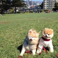 Boo and friend in SF.