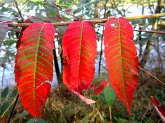 L'automne... Blagnac, Toulouse, Garonne