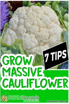 Want to learn how to grow cauliflower in no time to impress your friends without small curds. Take a peak at these 7 tips to help you grow cauliflower. Fall Vegetables, Types Of Vegetables, Container Gardening Vegetables, Growing Vegetables, Vegetable Gardening, Growing Broccoli, Allotment Gardening, Succulent Containers, Container Flowers