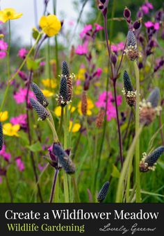 How to create a wildflower meadow - a low-maintenance and beautiful haven for wildlife and beneficial insects. These plantings thrive on poor soil and attract insects that help pollinate your garden plants and help naturally balance garden pest populations.