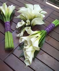 Arum Lily Flowers