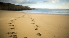 Go for a winter walk at Stackpole © National Trust Images / John Miller