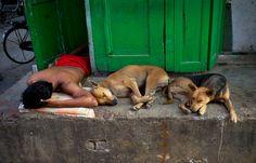 An Indian man sleeps with stray dogs in Kolkata on October 17, 2012. (Saurabh Das/Associated Press) #