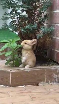Baby Animals Super Cute, Cute Baby Bunnies, Cute Little Animals, Cute Funny Animals, Cute Cats, Cute Babies, Baby Animals Pictures, Cute Animal Photos, Cute Animal Videos