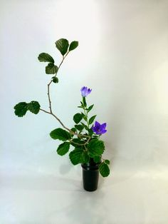 hanamai, the ikebana blog: Summer Ikebana In a Vase