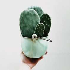 Inpiration And Creative DIY Cactus Planters You Should Copy Right Now Cacti And Succulents, Planting Succulents, Planting Flowers, Cactus Planters, Cactus Pot, Cactus Decor, Vert Pantone, Pot Plante, Plants Are Friends