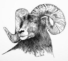 Big Horned Sheep Drawing