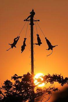 Dance of the Papantla Flyers, My friend Lupe did this while we were in Puebla..