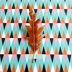 Hêtre ou ne pas hêtre #flowleaf2015 #12octobre #lamarelle