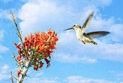 Avian - Soar by Saija Lehtonen Bird Artists, Wall Art, Prints, Poster, Animals, Hummingbirds, Free, Animales, Animaux