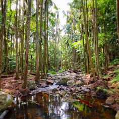 Re-acquaint yourself with nature at Curtis Falls in Tamborine Mountain National Park.
