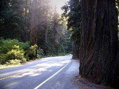Jedediah Smith Redwoods State Park, Del Norte Co., CA. I've never seen anything like it! A MUST SEE!