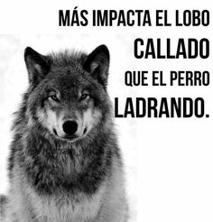 """More impacts the quiet Lobo than the barking dog."""