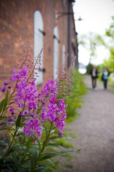 Kesäisiä kukkia / Summer Bloom