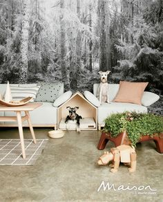 반려 동물을 위한 따뜻한 집| Daum라이프