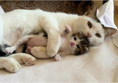 sweet mamma and baby