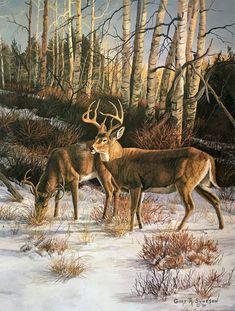 "Gary Swanson - ""Regal Companions"" Image Size: x Overall Size: x Deer Photos, Deer Pictures, Cool Pictures, Deer Drawing, Horse Drawings, Drawing Art, Wildlife Paintings, Wildlife Art, Deer Paintings"