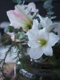 Mansikkatilan mailla: Kukkailottelua - Amaryllis, joulukukkien kuningatar? Marimekko, Plants, Plant, Planets