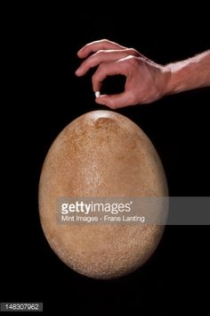 148307962-worlds-largest-and-smallest-bird-eggs-gettyimages.jpg (338×507)