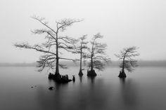 霧の沼地(米国・ルイジアナ州)