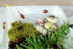 Simple Small Worlds: Insect World - to make with the girls