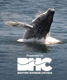 New England Aquarium whale watch: discount if members (look into library passes, which can be TEXTED TO YOUR PHONE! New England Aquarium, Whale Watching Tours, Boston Harbor, Winter Project, I Want To Travel, Places To Go, United States, Ocean, Places