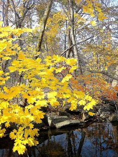 ✮ Golden Autumn - Philadelphia, Pennsylvania