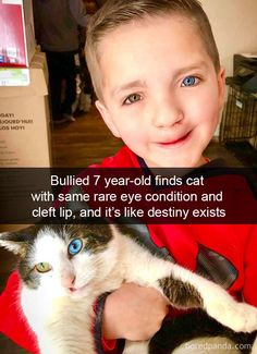 Lustige Katzenbilder - Humour Ninja - Funny Memes and Funny Pictures - Pin Sweet Stories, Cute Stories, Happy Stories, Cute Funny Animals, Cute Baby Animals, Funny Cute Cats, Human Kindness, Photo Chat, Humanity Restored