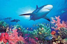 Under the Ocean - Ocean Life