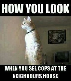 BE HONEST IS THIS YOU?  Law Enforcement Today www.lawenforcementtoday.com