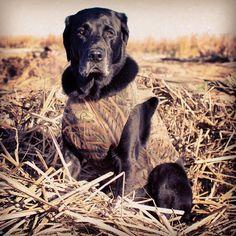 Serious Business - Watching & waiting for the ducks in North Dakota