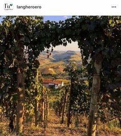 #langhe #vigna #nebbiolo #barolo #vendemmia #autunno