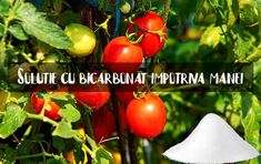Solutie cu bicarbonat de sodiu impotriva manei la rosii si alte legume | LaTAIFAS Barbacoa, Vegetables, Gardening, Design, Agriculture, Plant, Lawn And Garden, Barbecue