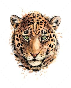 Buy Portrait of a Leopard Head From a Splash of by kapona on GraphicRiver. Portrait of a leopard head from a splash of watercolor, hand drawn sketch. Vector illustration of paints Art Roi Lion, Lion King Art, Leopard Tattoos, Amazon Animals, Tiger Artwork, Le Zoo, Wild Animals Photos, Lesage, Purple Aesthetic