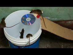 mouse trap ~ mouse trap - mouse trap car - mouse trap diy - mouse trap car how to make a - mouse trap crafts - mouse traps diy homemade - mouse trap game - mouse trap crafts ideas Mouse Trap Diy, Best Mouse Trap, Rat Trap Diy, Boutique Interior, Chinchilla, Chipmunk Trap, Mouse Traps That Work, Pets, Home