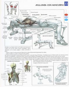 Many exercise and gym beginners make the mistake of focusing on the more hyped muscle groups like abs or biceps. Leg day workout for weight loss is important and plays a key role in both getting fit, losing weight, and staying that way. Best Chest Workout, Chest Workouts, Gym Workouts, At Home Workouts, Chest Exercises, Swimming Workouts, Swimming Tips, Body Exercises, Fitness Nutrition