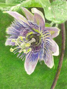 Rainforest Garden Illustrations by Steve Asbell, via Behance