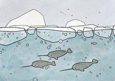 Narwhals illustration print - david scheirer