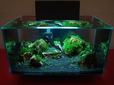 fluval edge planted   Fluval Edge   A Pictorial Celebration of your Passion   [T A G]