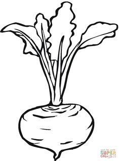 Beetroot 7 coloring page from Beets category. Select from 26736 printable crafts of cartoons, nature, animals, Bible and many more. Super Coloring Pages, Free Printable Coloring Pages, Coloring Pages For Kids, Coloring Sheets, Coloring Books, Colouring, Art Drawings For Kids, Colorful Drawings, Drawing For Kids