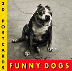 Funny Dogs Postcard Book  BUY NOW      $10.95  http://funnymemes.site/funny-dogs-postcard-book/