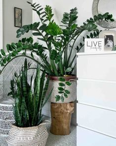 Indoor plant stands have a dual function; they support plants and they act as home decor items. Choosing the right plant stand is a fun, creative process. Begonia, Best Indoor Plants, Indoor Garden, Indoor Tropical Plants, Zz Plant, Plant Basket, Unique Plants, Macrame Plant Hangers, Different Plants
