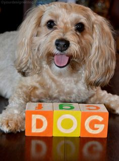 Celebrate National Dog Day! - YourDesignerDog